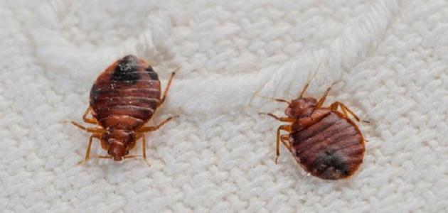 إلهام محرق مثير للإعجاب حشرة صغيرة لونها بني Plasto Tech Com