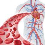 كم طول الاوعية الدموية في جسم الانسان