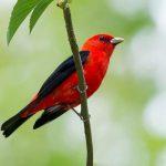 بحث عن الطيور وانواعها
