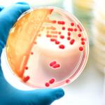 كيف تتحرك البكتيريا