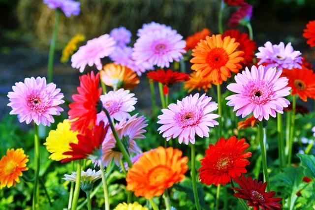 اسماء الورود النادره المرسال
