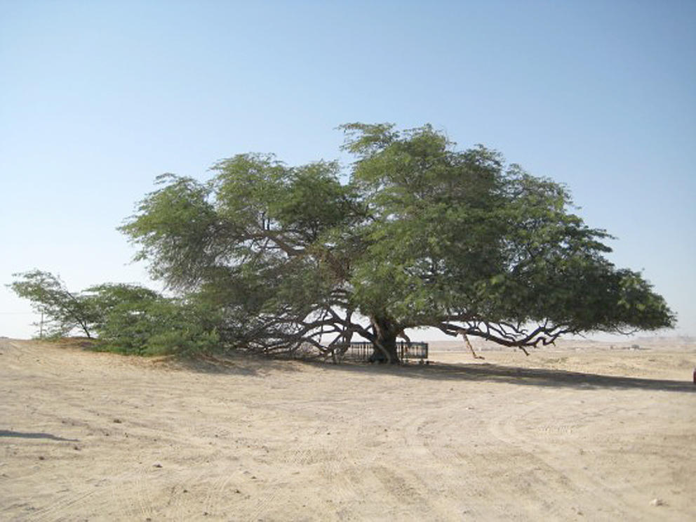 اجمل الرحلات السياحيه عيون مصر2019