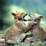 صور مهن ترتبط بالحيوان