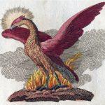 معلومات عن طائر الفينيق