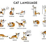 تصرفات و حركات القطط ومعانيها بالصور