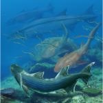 """خصائص الاسماك اللافكيات وامثلة من انواع """" الاسماك اللافكية """""""