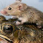 ما هو سلوك الايثار في الحيوانات