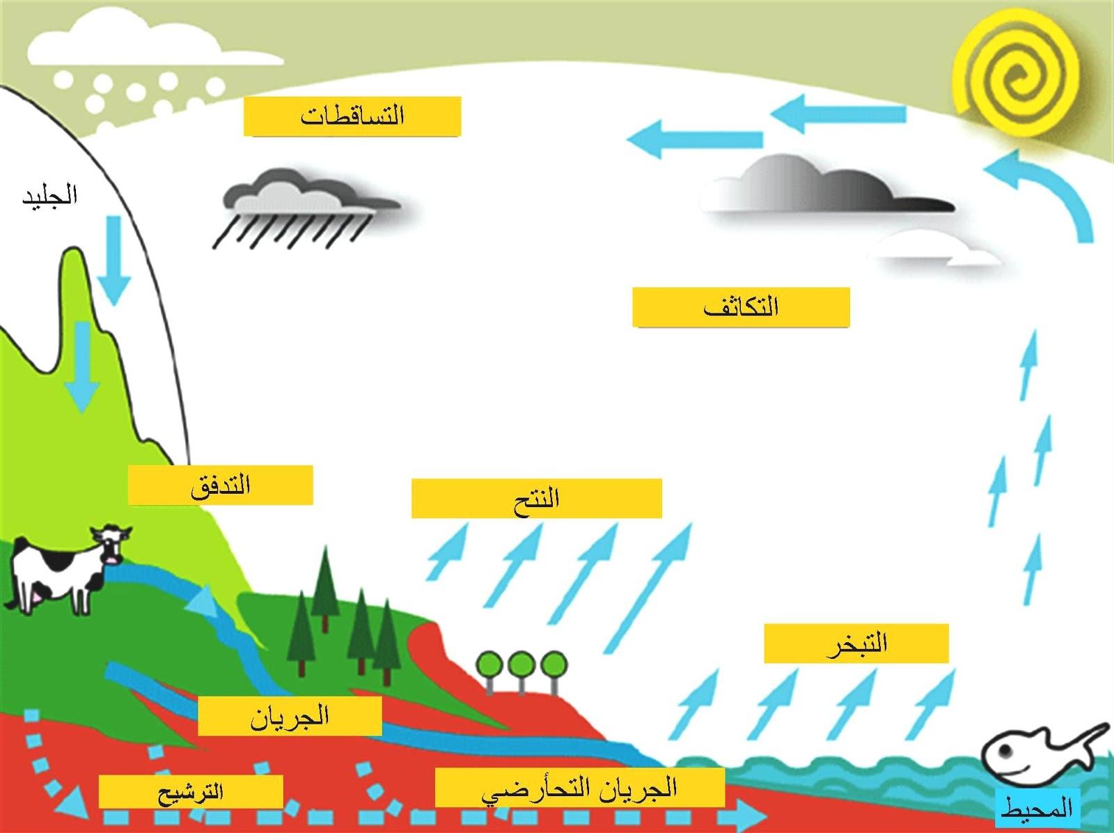 الدورات الطبيعية في البيئة المرسال
