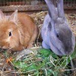 ما هو سلوك الاغتذاء عند الحيوانات