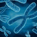 كيف تنتقل الصفات الوراثية من الاباء الى الابناء