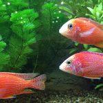 خصائص الأسماك الغضروفية والأسماك العظمية