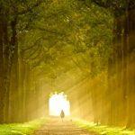 اهمية الايمان بالقضاء والقدر و ثمراته