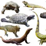 بحث عن الزواحف كامل
