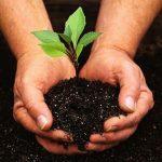 كيف يحسن الدبال خصوبة التربة