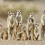 اساسيات علم سلوك الحيوان