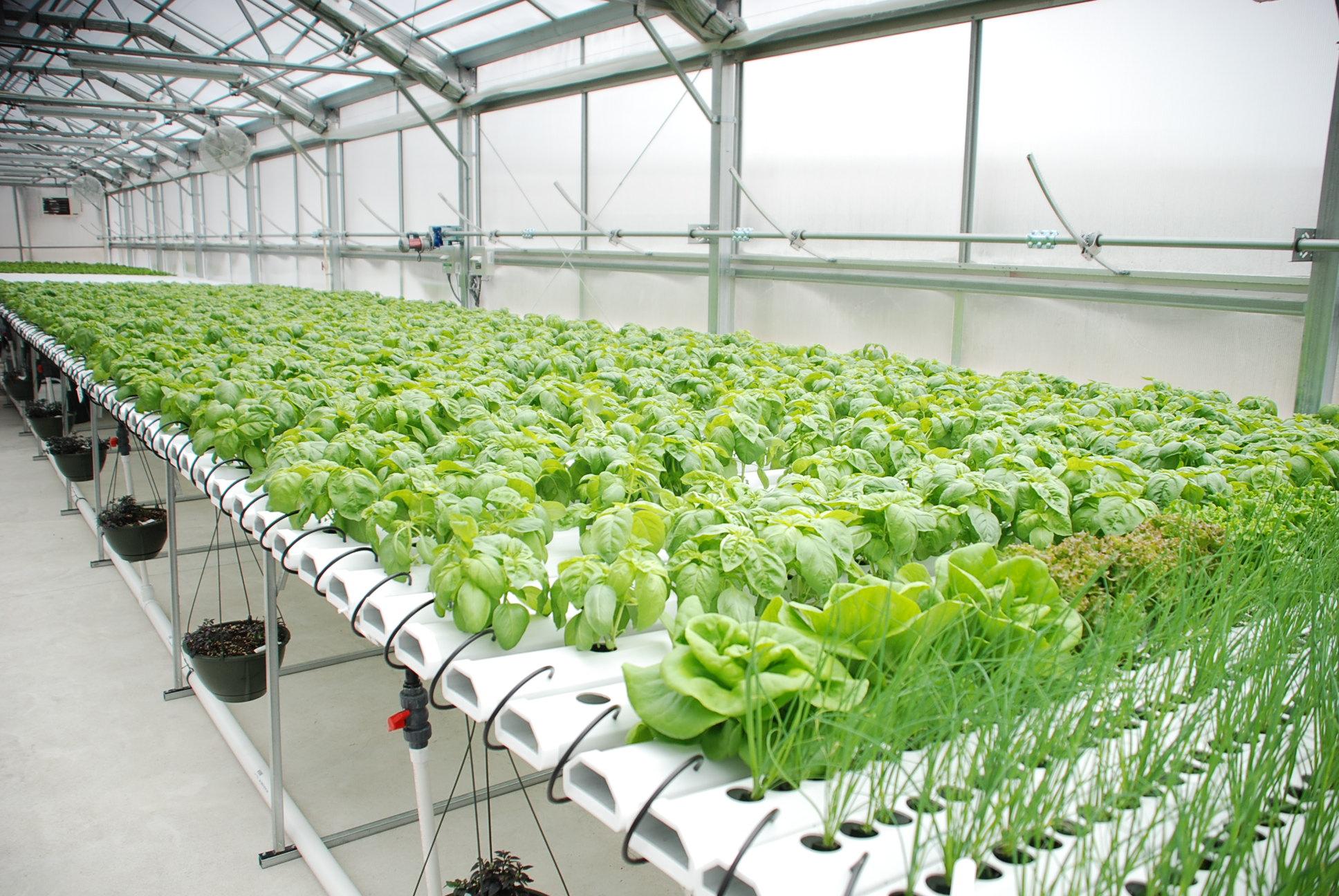مستلزمات الزراعة المائية %D9%85%D8%B3%D8%AA%D