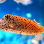 مقارنة بين الاسماك اللافكية والاسماك الغضروفية والاسماك العظمية