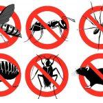 طرق مكافحة الحشرات بدون كيماويات ومواد ضارة
