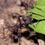 اسماء حشرات مسالمة وحشرات مؤذية