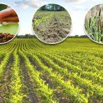 موضوع تعبير عن اهمية الزراعة