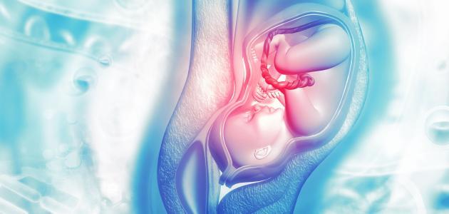مشروبات تساعد على توسيع الرحم للولاده المرسال