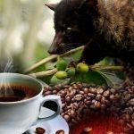 فوائد قهوة كوبي لواك