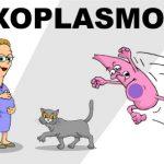 علامات و اعراض جرثومة القطط