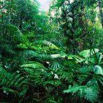 حيوانات الغابات الاستوائية