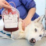 انواع فصائل دم الحيوانات