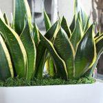 أهم النباتات التي تنقي الهواء في منزلك