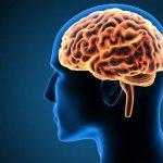 ما هي النسبة المئوية التي يستخدمها الدماغ البشري ؟
