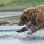 الحيوانات التي تتمتع بحاسة شم قوية