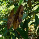 مرض عفن التاج وكيفية حماية النبات منه