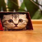 اسباب ارتعاش القطط