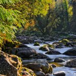 نظافة البيئة وحمايتها من التلوث