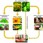 السلسلة الغذائية للانسان