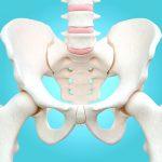 أهمية النخاع العظمي في الجسم