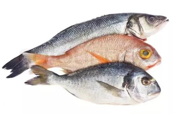 تفسير رؤية السمك النيء في المنام المرسال