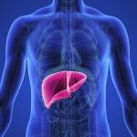 معلومات طبية عامة عن الكبد
