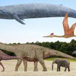 حيوانات منقرضة منذ ملايين السنين
