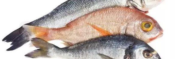 تفسير حلم السمك النيء الفاسد المرسال