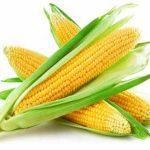 اكثر من 20 فائدة من فوائد الذرة