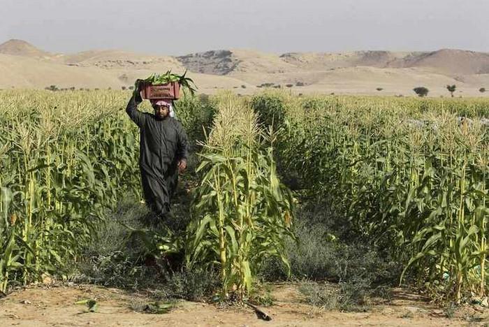 Agriculture Blog: الزراعة في تبوك السعودية