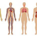 معلومات طبية عامة عن جسم الانسان