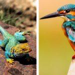 خصائص مشتركة بين الزواحف والطيور