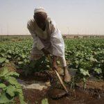 المحاصيل الزراعية التي تشتهر بها مدن المملكة