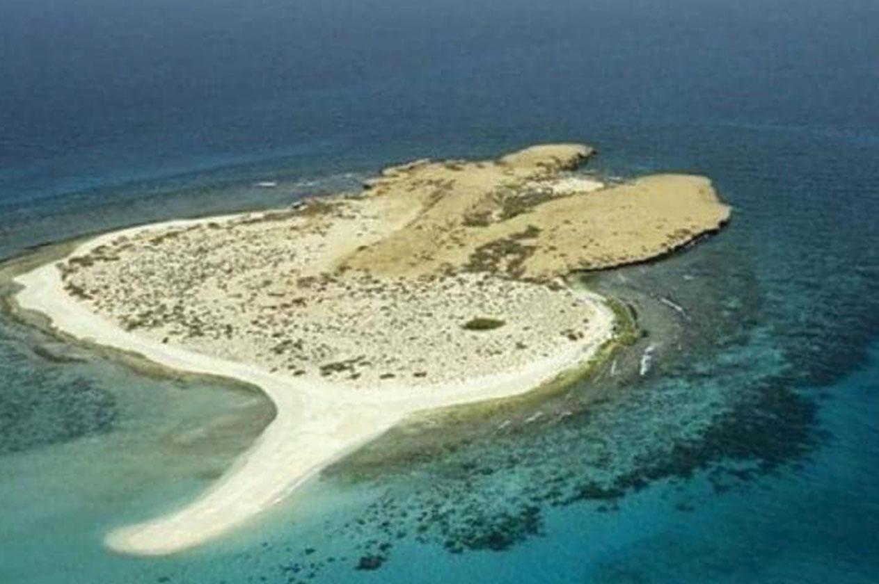بحث عن جزيرة فرسان عربي انجليزي المرسال