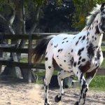 Photo of حقائق برية حول خيول النابسترابر