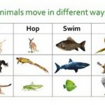 Photo of انماط التنقل عند الحيوانات