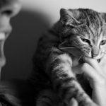 Photo of طريقة علاج عضة القطة المنزلية